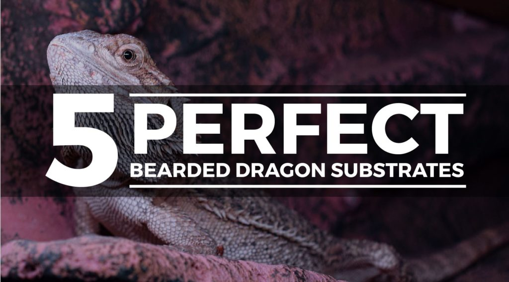 bearded dragon susbtrate