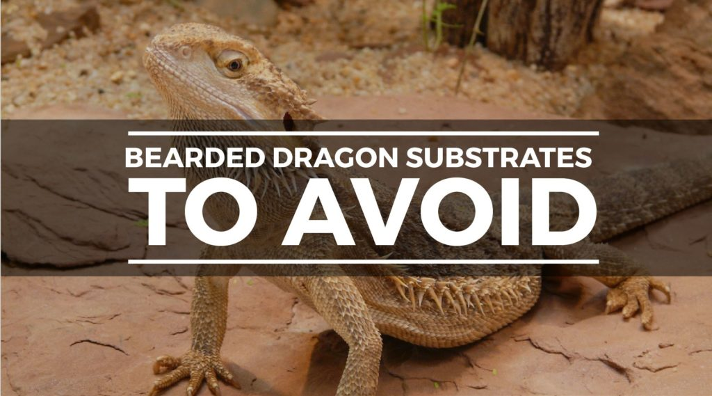 bad bearded dragon substrate