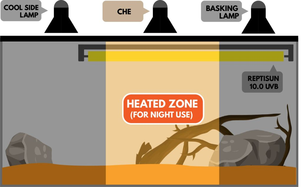 Bearded Dragon Lighting Everything You Need To Know Reptile Advisor