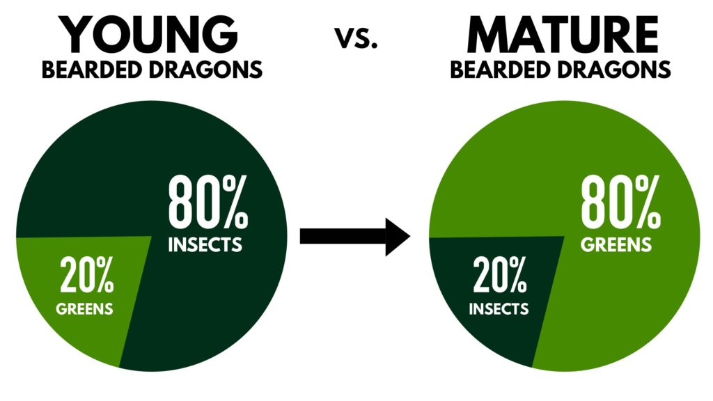 The True Cost of Owning a Bearded Dragon (Bearded Dragon