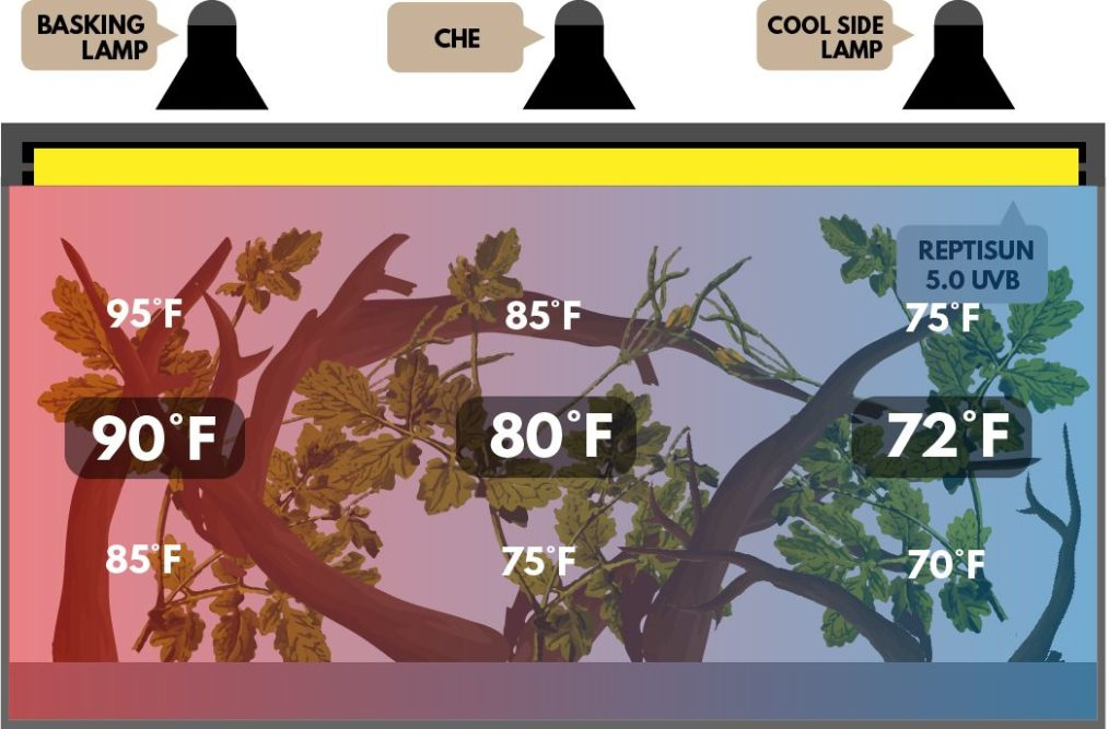 Chameleon Lighting Everything You Need To Know Reptile Advisor