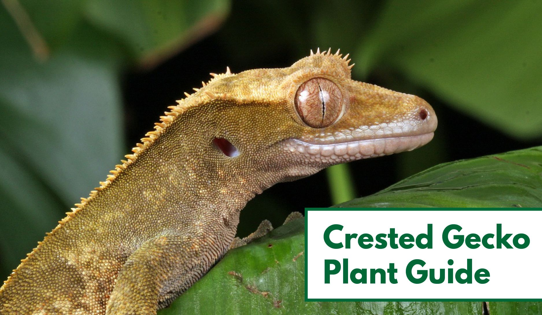 crested gecko plants