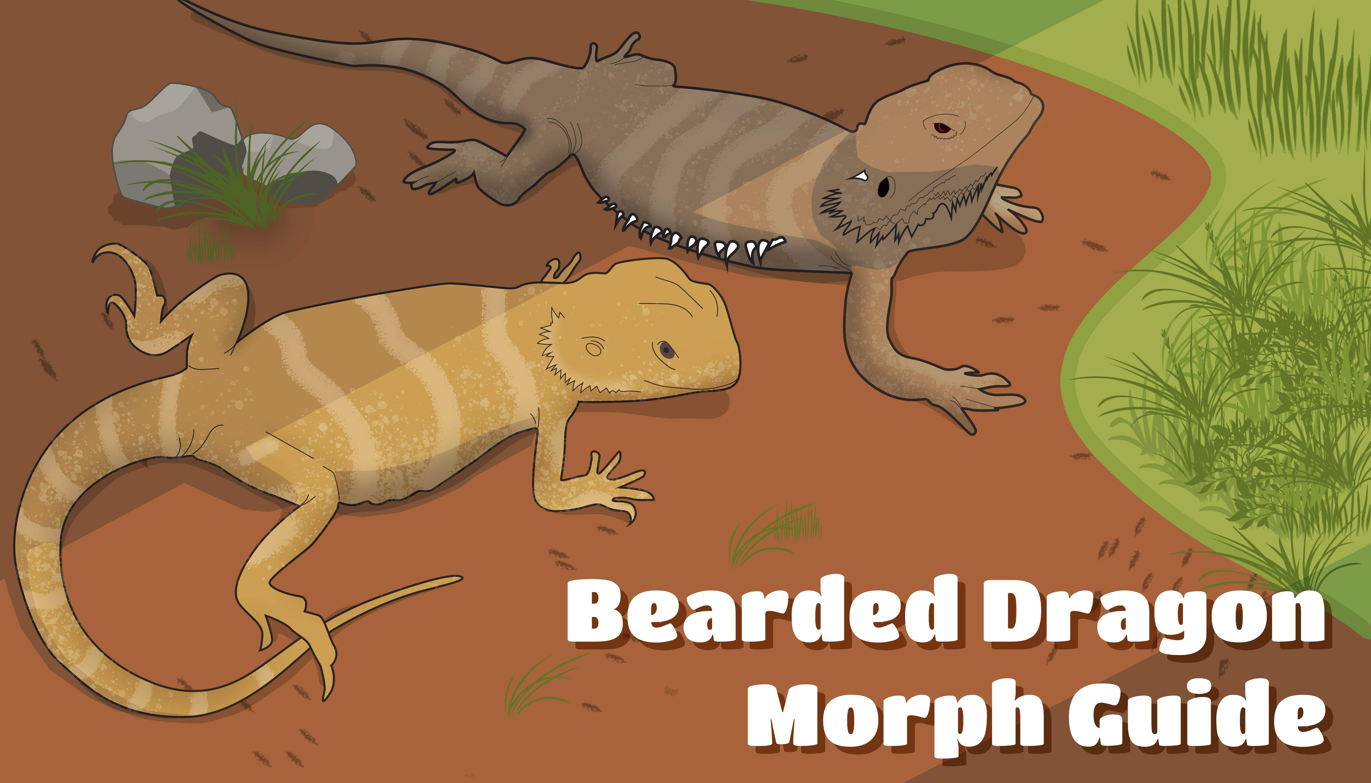 bearded dragon morphs