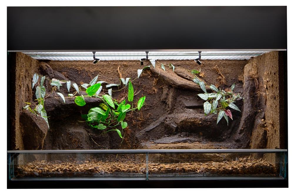 plants in snake tank