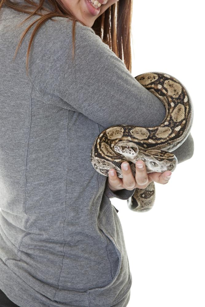 Pet Boa Snake